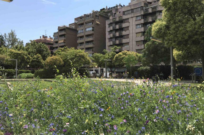 Huesca verde AEPJP